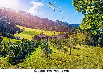 tanya, olaszország, mező, táj, kék, italy., farmhouse., vidéki, falu, village., nyár, ég, színpadi, day.