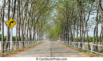 tanya, vonalazott, fa, út
