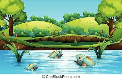tavacska, fish