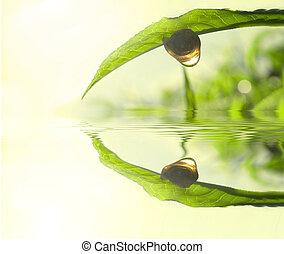 tea, fogalom, levél növényen, zöld, fénykép