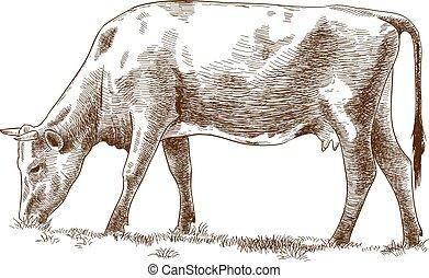 tehén, ábra, metszés