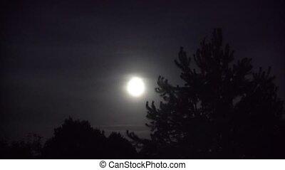 tele, elhomályosul, fa, hold, nagy, éjszaka, bűnös