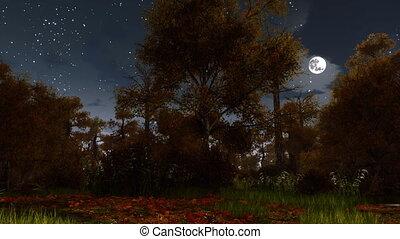 tele, kísérteties, hold, ősz erdő, éjszaka, 4k