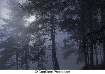tele, ködös, hold, éjszaka, erdő