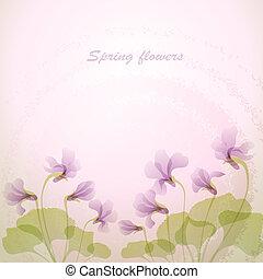 tender, eredet, flowers., ibolya, backg