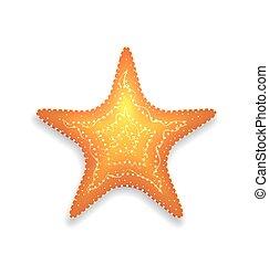 tengeri csillag, elszigetelt, háttér, narancs, árnyék, fehér