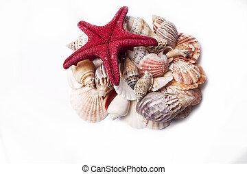 tengeri kagylók, white háttér