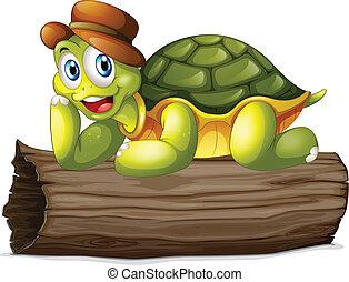 tengeri teknős, fahasáb, felül