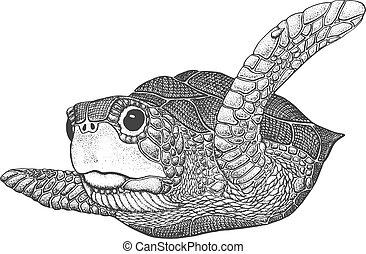tengeri teknős, metszés, tenger, ábra