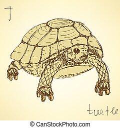 tengeri teknős, szüret, skicc, mód, elképzel