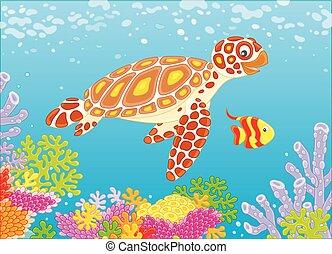tengeri teknős, tenger, zátony