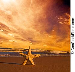 tengerpart, napnyugta, tengeri csillag
