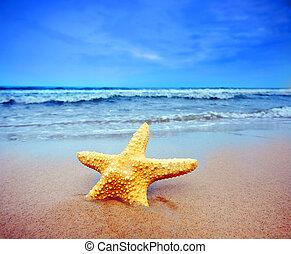 tengerpart, tengeri csillag