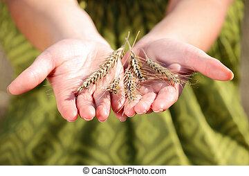 termés, kéz