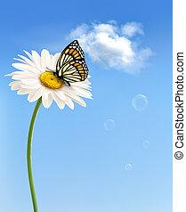 természet, butterfly., vektor, eredet, százszorszép, virág, illustration.