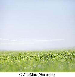 természet, tiszta égbolt, zöld háttér, fű