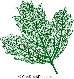 természetes, isolated., makro, leaf., vektor, levél növényen