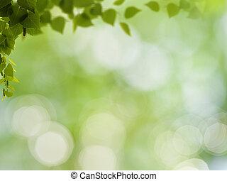természetes szépség, elvont, háttér, bokeh, lombozat, nyírfa