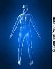 test, alakít, emberi
