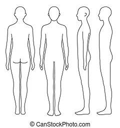 test, emberi, áttekintés, lejtő, hát, elülső