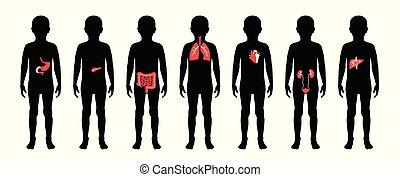 test, fiú, ábra, belső, gyermek, hangerők