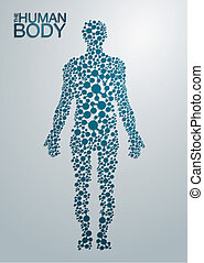 test, fogalom, emberi