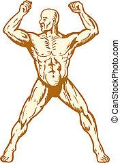 test, hím, építő, anatómia, hajlító, emberi izom