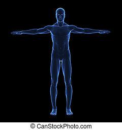 test, ismeretlen mennyiség, emberi, fénysugár