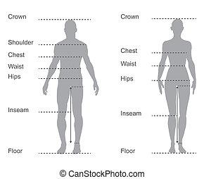 test, mérés, ábra, diagram, női, mérés, hím, öltözet, nagyság
