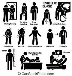 testes, testicular, testicles, rák
