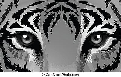tiger, éles, szemek