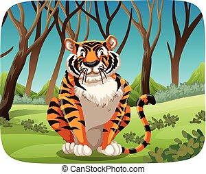 tiger, erdő