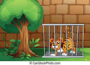 tiger, kalitka