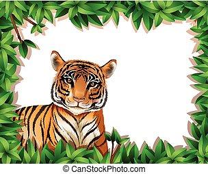 tiger, keret, természet