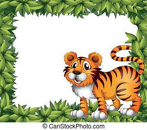 tiger, keret, zöld