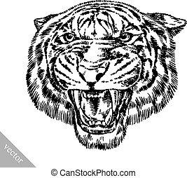 tiger, rajzol, bevés, ábra, tinta