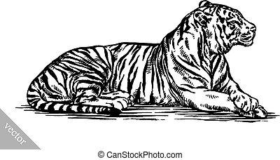tiger, rajzol, bevésett, ábra, tinta