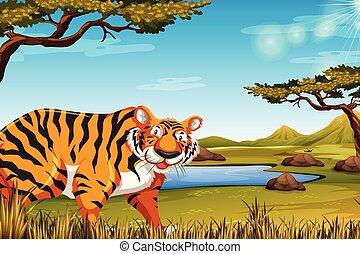 tiger, színhely, természet