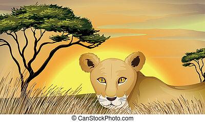 tiger, természet
