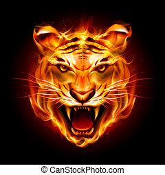 tigris fő, láng