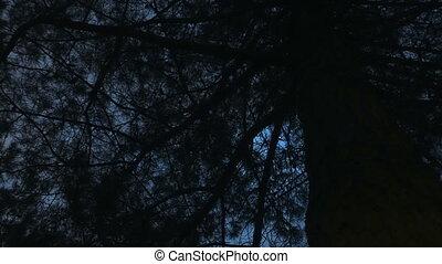 timelapse., éjszaka ég, erdő, hold