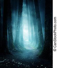 titokzatos, erdő, gyalogjáró