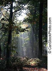 titokzatos, erdő