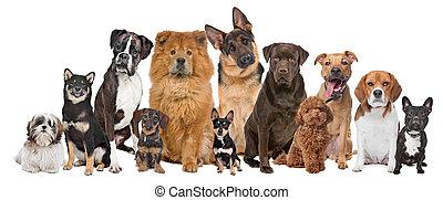 tizenkettő, csoport, kutyák