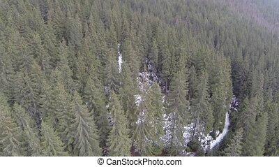 toboztermő fa, antenna vadászterület, erdő