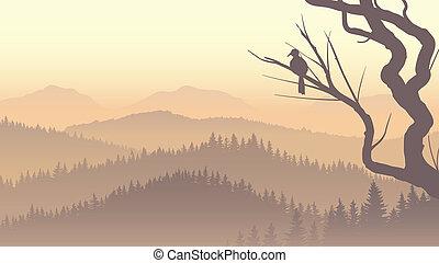 toboztermő fa, fog., erdő, reggel