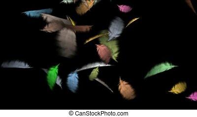 tollazat, szín, úszó