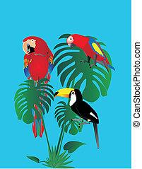 toszkánai, forest.., papagáj, eső, ülés