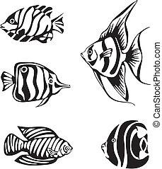 trópusi hal, állhatatos, fekete, fehér