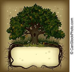 transzparens, tölgyfa, wih